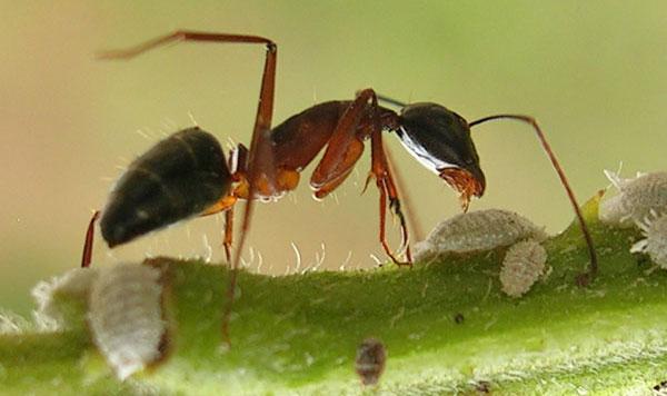 Mieren bestrijden